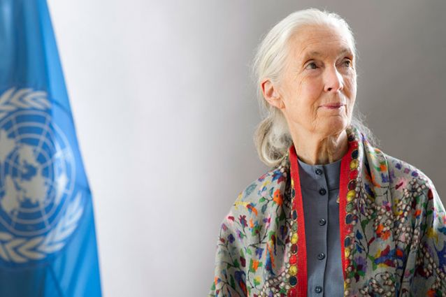 Conservationist and ethologist Jane Goodall pictured with the United Nations flag as a U.N. Messenger of Peace