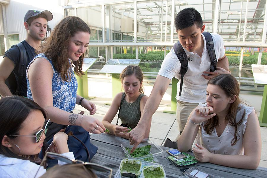2018 Tisch Summer Fellows Touring Community Gardens in NYC